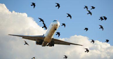 Filmpje: Bird Strike Collision na take-off